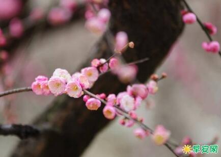 關於春天的好句子 有關描寫春天的句子