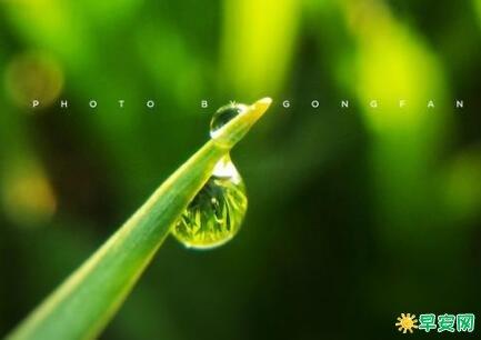 春雨優美的句子 春雨的美句發朋友圈