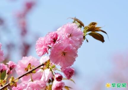 關於春風的詩詞佳句 含有春風的七言詩句