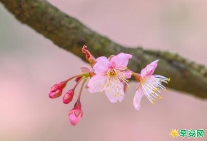 春暖花開的朋友圈說說 表達春暖花開的朋友圈句子