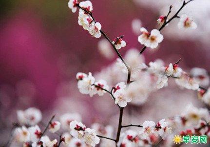 王維寫春天的詩句及賞析 王維描寫春天美景的詩