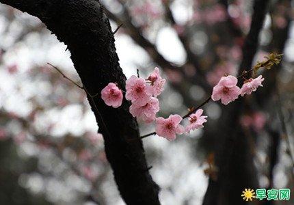 春分節氣的優秀詩詞 關於春分的古詩最簡單的