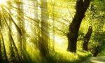 植樹節早安問候語 植樹節早安說說句子